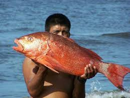 Beach Fishing Playa Hermosa