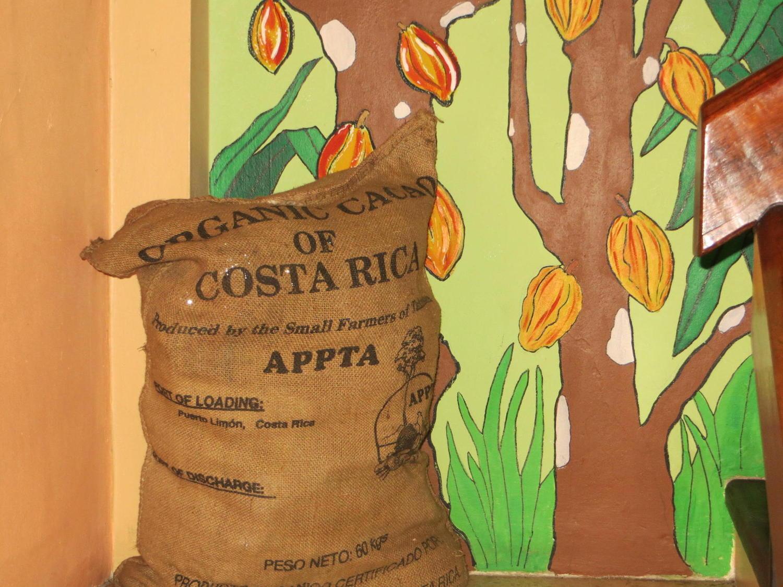 Costa Rica Cocoa