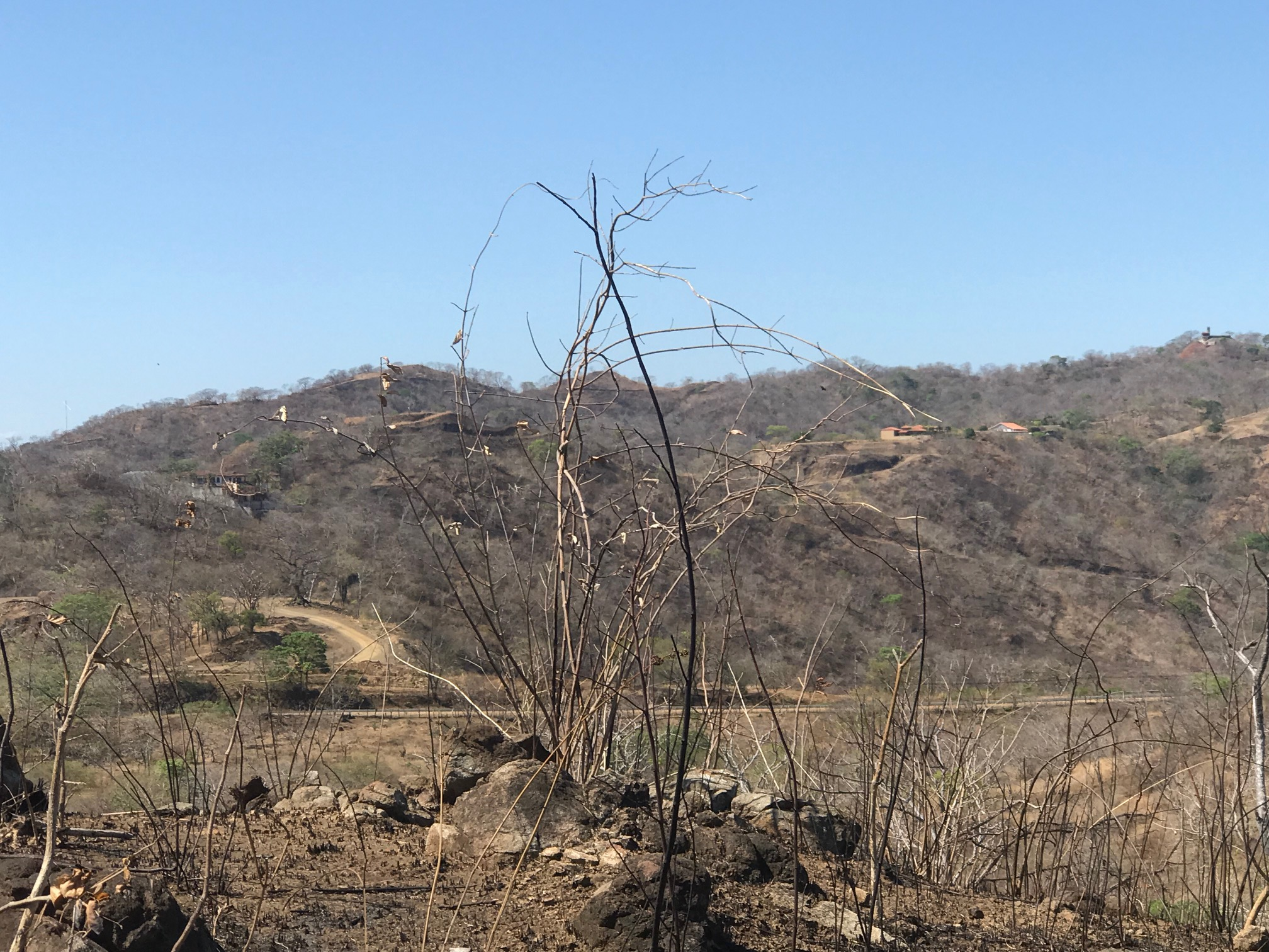 Dry landscape of Guanacaste during the Costa Rica dry season