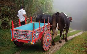Traditional Oxcart on a mountain path in Costa Rica