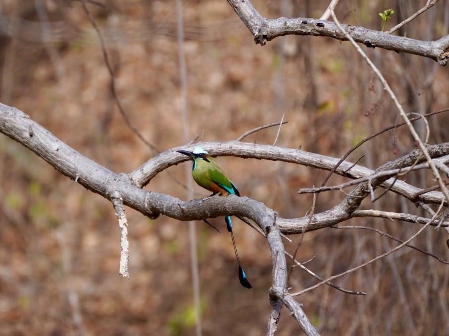 Colorful bird in Rincón de la Vieja national park