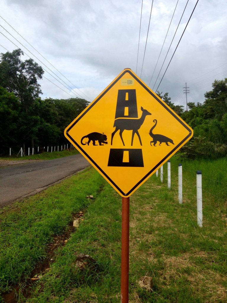Costa Rica road sign advising drivers to watch out for monkeys, deer and coatimundis